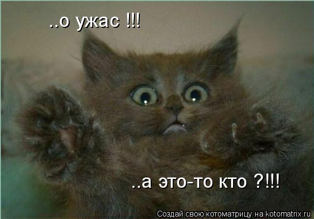 Котоматрица: ..о ужас !!! ..а это-то кто ?!!!