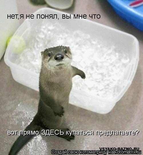 Котоматрица: вот прямо ЗДЕСЬ купаться предлагаете? нет,я не понял, вы мне что