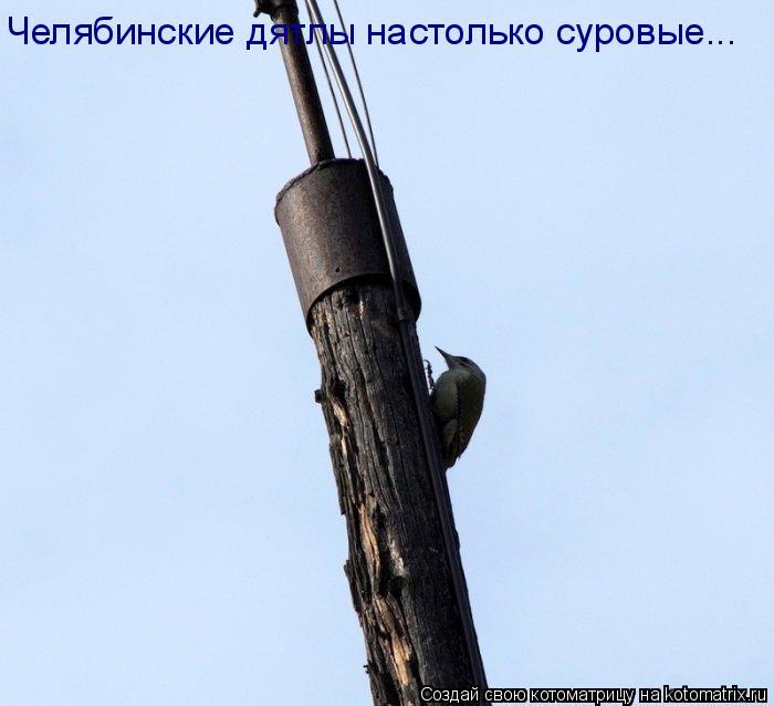 Котоматрица: Челябинские дятлы настолько суровые...