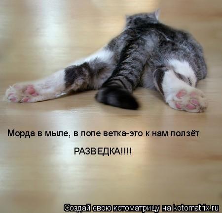 Котоматрица: Морда в мыле, в попе ветка-это к нам ползёт  РАЗВЕДКА!!!!