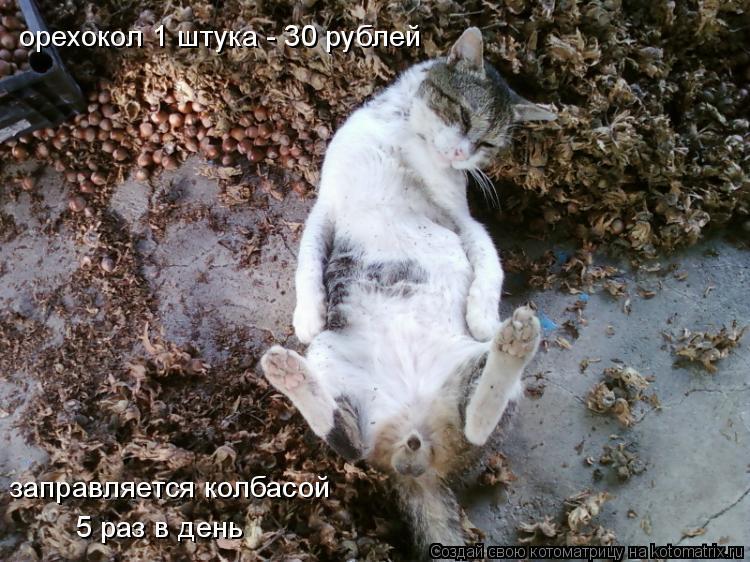 Котоматрица: орехокол 1 штука - 30 рублей заправляется колбасой 5 раз в день