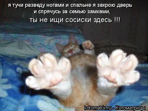 Котоматрица: я тучи разведу ногами и спальне я закрою дверь и спрячусь за семью замками,  ты не ищи сосиски здесь !!!