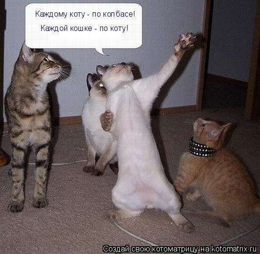Котоматрица: Каждому коту - по колбасе! Каждой кошке - по коту!