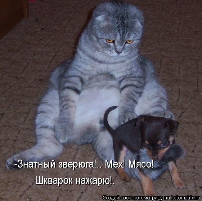Котоматрица: -Знатный зверюга!.. Мех! Мясо!  Шкварок нажарю!.