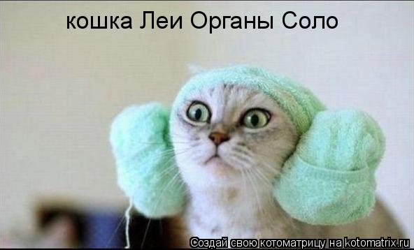 Котоматрица: кошка Леи Органы Соло