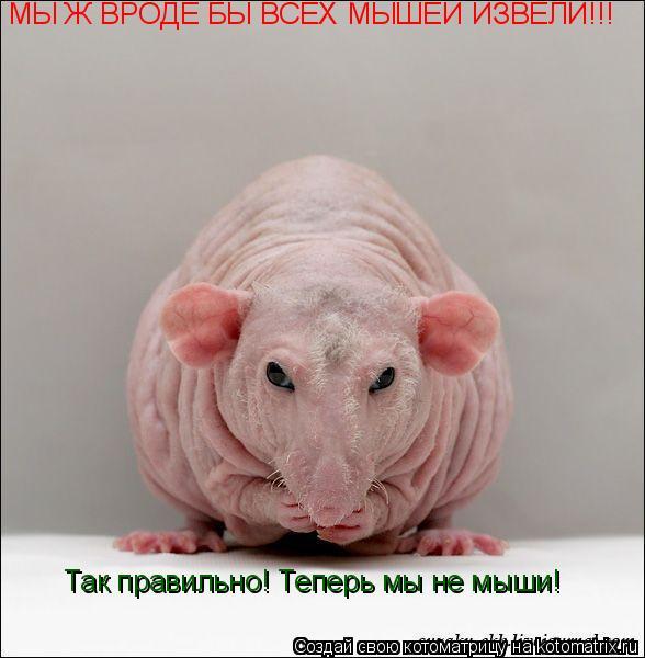 Котоматрица: МЫ Ж ВРОДЕ БЫ ВСЕХ МЫШЕЙ ИЗВЕЛИ!!! Так правильно! Теперь мы не мыши!
