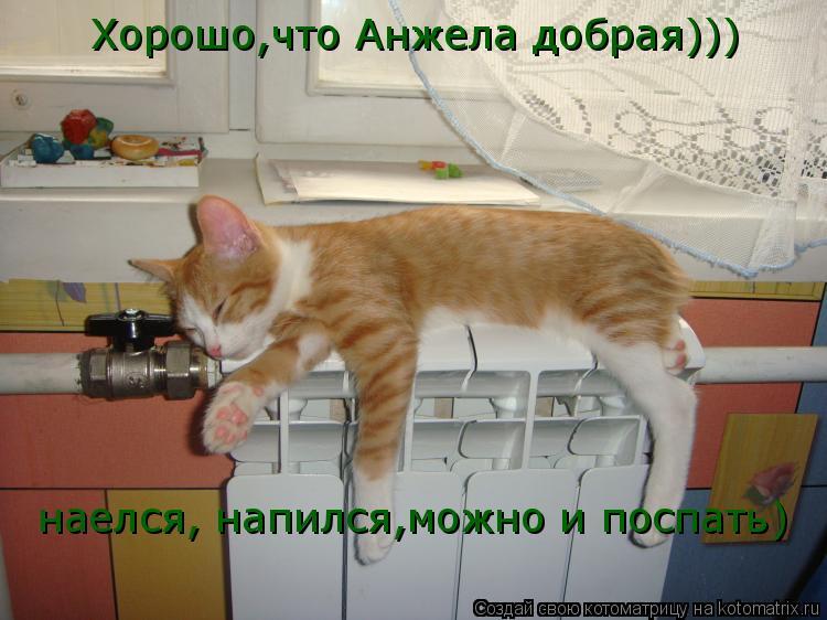 Котоматрица: Хорошо,что Анжела добрая))) наелся, напился,можно и поспать)