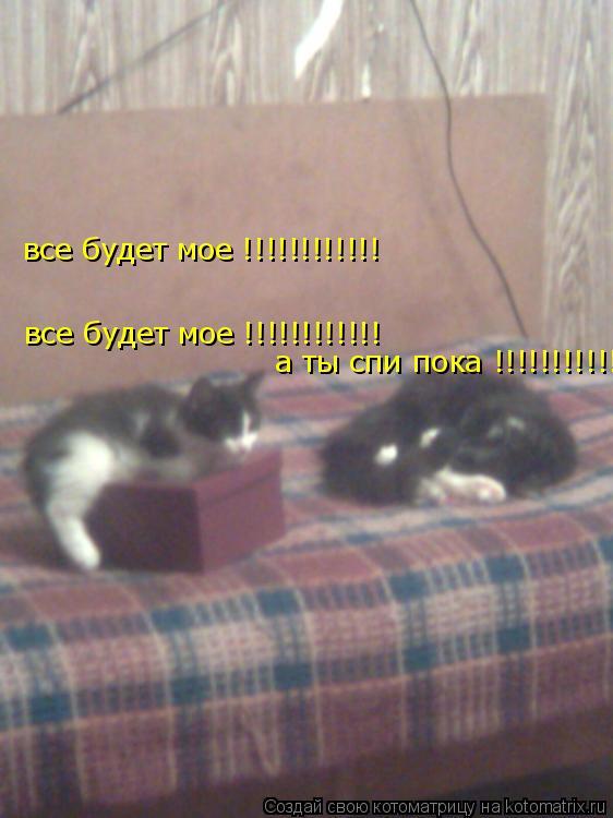 Котоматрица: все будет мое !!!!!!!!!!!!   все будет мое !!!!!!!!!!!!   а ты спи пока !!!!!!!!!!!!