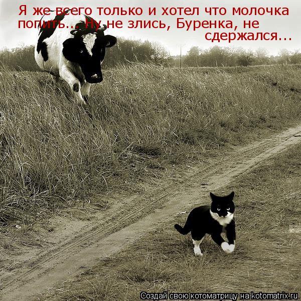 Котоматрица: Я же всего только и хотел что молочка попить... Ну не злись, Буренка, не  сдержался...