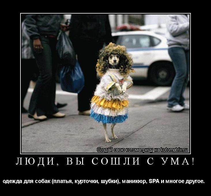 Котоматрица: Люди, вы сошли с ума! одежда для собак (платья, курточки, шубки), маникюр, SPA и многое другое.