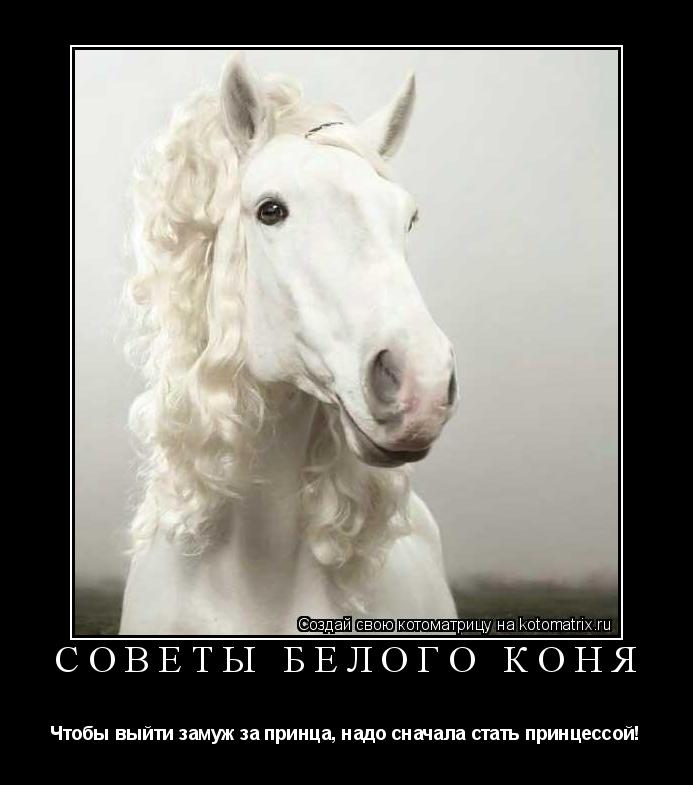 Котоматрица: Советы белого коня   Чтобы выйти замуж за принца, надо сначала стать принцессой!