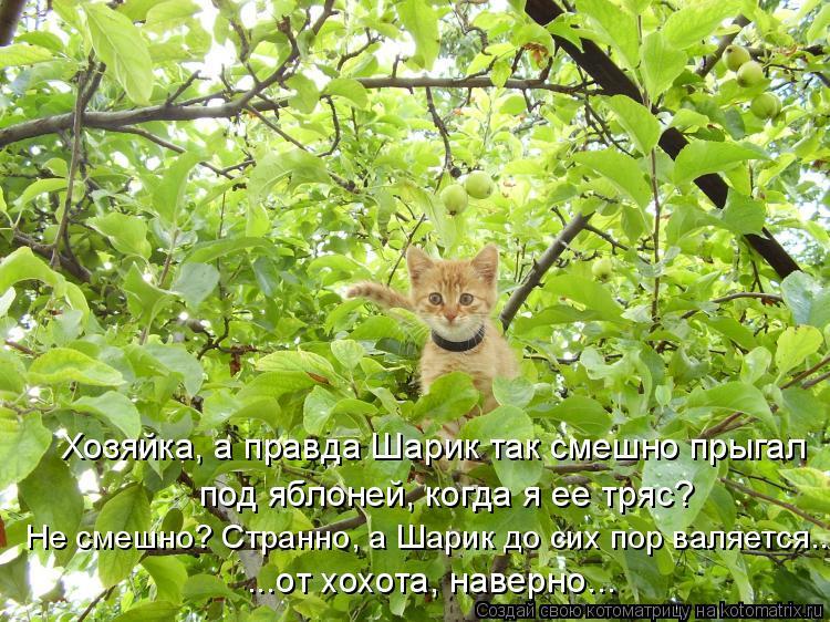 Котоматрица: Хозяйка, а правда Шарик так смешно прыгал под яблоней, когда я ее тряс? Не смешно? Странно, а Шарик до сих пор валяется... ...от хохота, наверно...