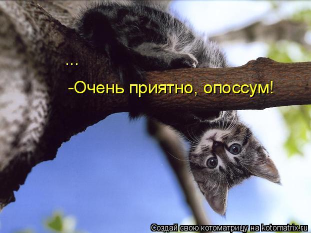 Котоматрица: -Очень приятно, опоссум! ... ...