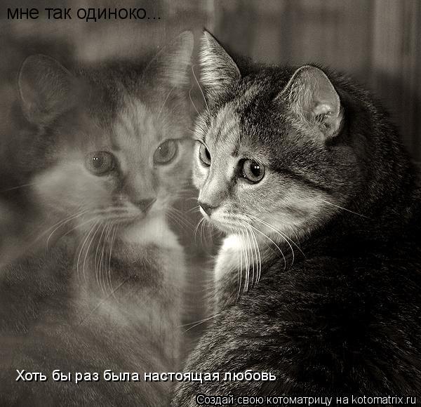 Котоматрица: мне так одиноко... Хоть бы раз была настоящая любовь