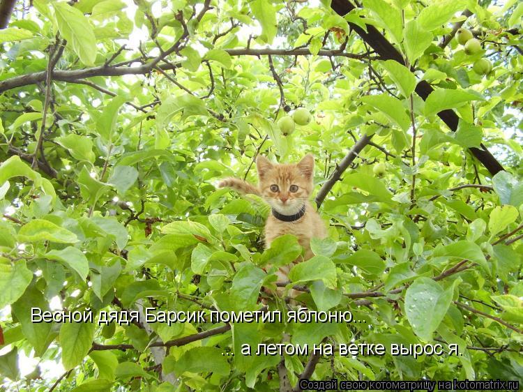 Котоматрица: ... а летом на ветке вырос я. Весной дядя Барсик пометил яблоню...