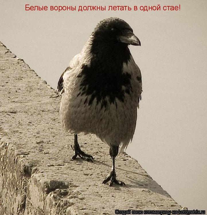 Котоматрица: Белые вороны должны летать в одной стае!