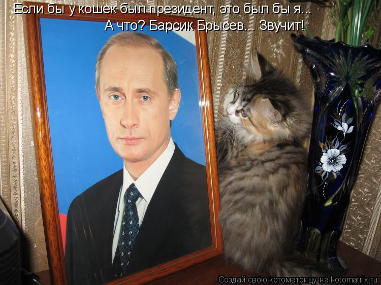 Котоматрица: Если бы у кошек был президент, это был бы я... А что? Барсик Брысев... Звучит!