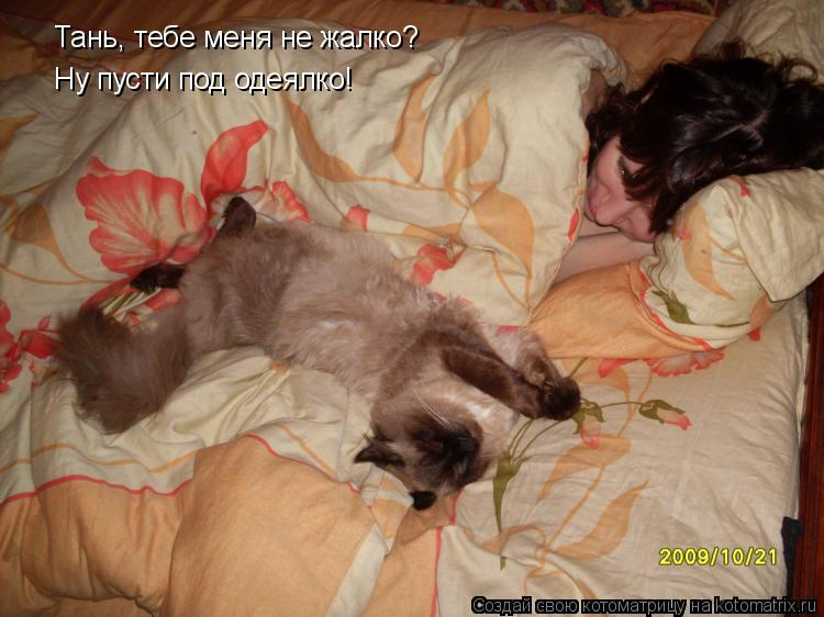 Котоматрица: Тань, тебе меня не жалко? Ну пусти под одеялко!