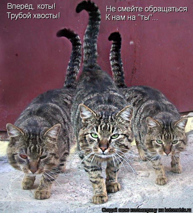 """Котоматрица: Вперёд, коты! Трубой хвосты! Не смейте обращаться К нам на """"ты""""..."""