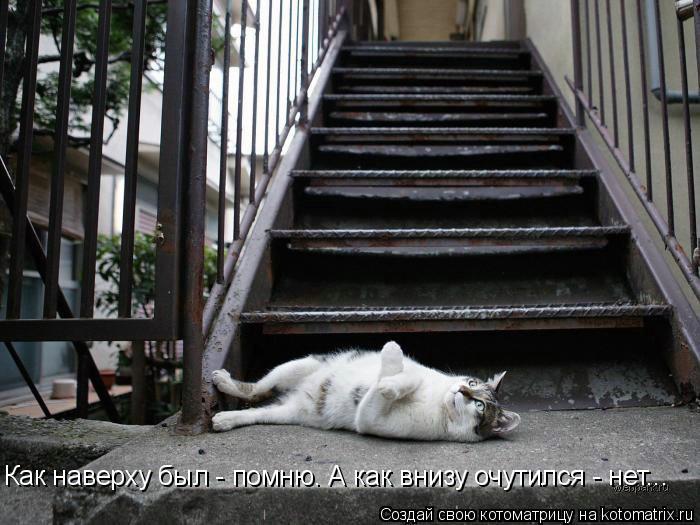 Котоматрица: Как наверху был - помню. А как внизу очутился - нет...