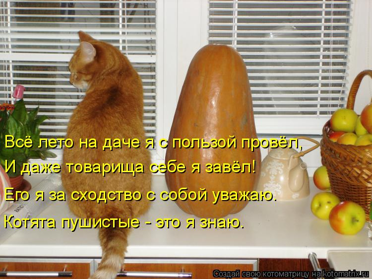 Котоматрица: Всё лето на даче я с пользой провёл,  И даже товарища себе я завёл! Его я за сходство с собой уважаю. Котята пушистые - это я знаю.