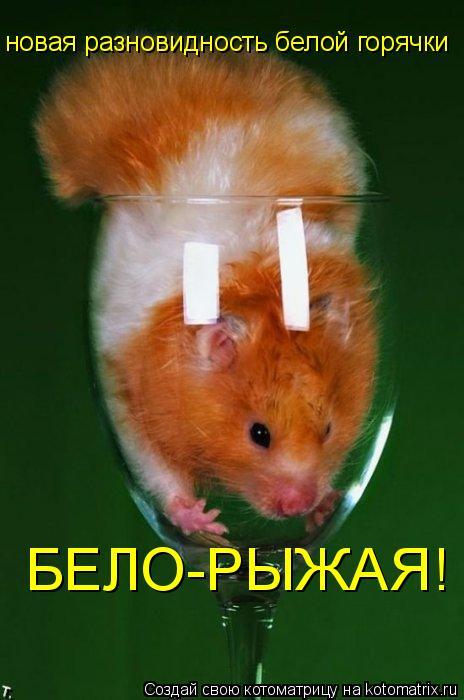Котоматрица: новая разновидность белой горячки БЕЛО-РЫЖАЯ!