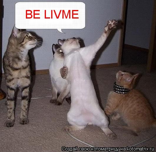 Котоматрица: BE LIVME