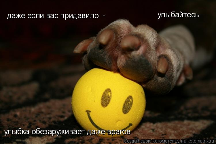 Котоматрица: даже если вас придавило - улыбка обезаруживает даже врагов улыбайтесь