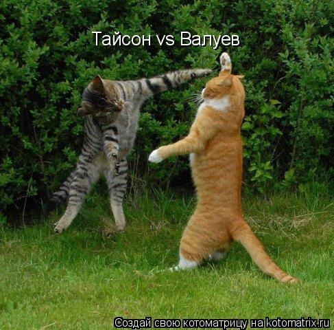 Котоматрица: Тайсон vs Валуев