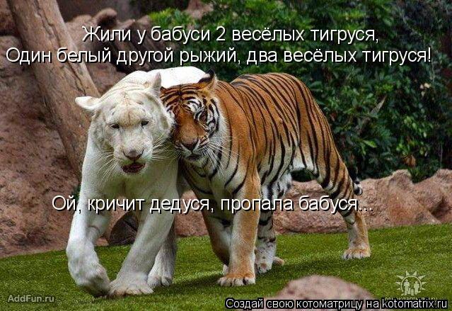 Котоматрица: Жили у бабуси 2 весёлых тигруся, Один белый другой рыжий, два весёлых тигруся! Ой, кричит дедуся, пропала бабуся...