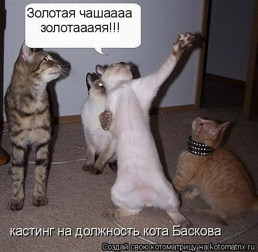 Котоматрица: Золотая чашаааа золотаааяя!!! кастинг на должность кота Баскова