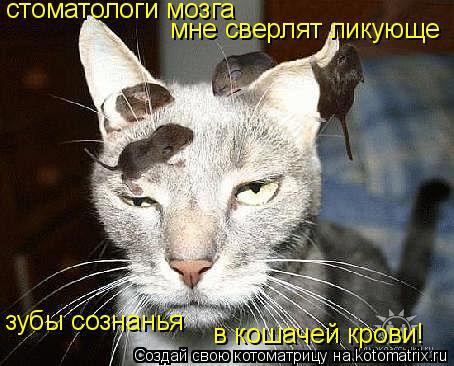 Котоматрица: стоматологи мозга мне сверлят ликующе зубы сознанья в кошачей крови!