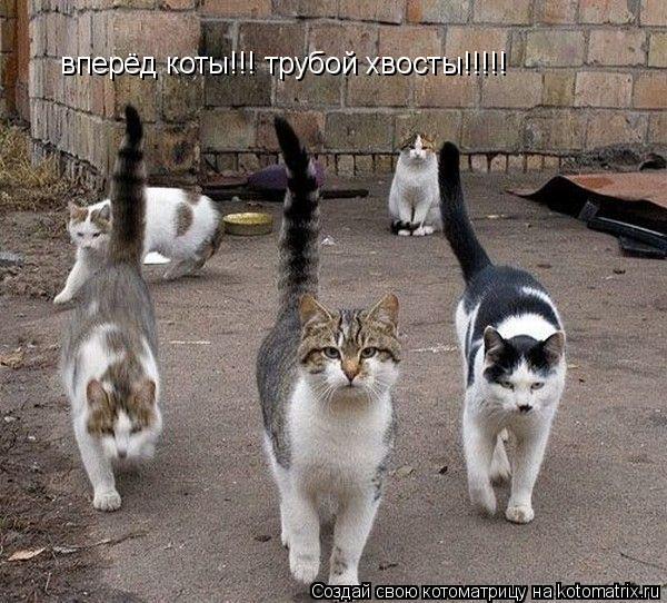 Котоматрица: вперёд коты!!! трубой хвосты!!!!!