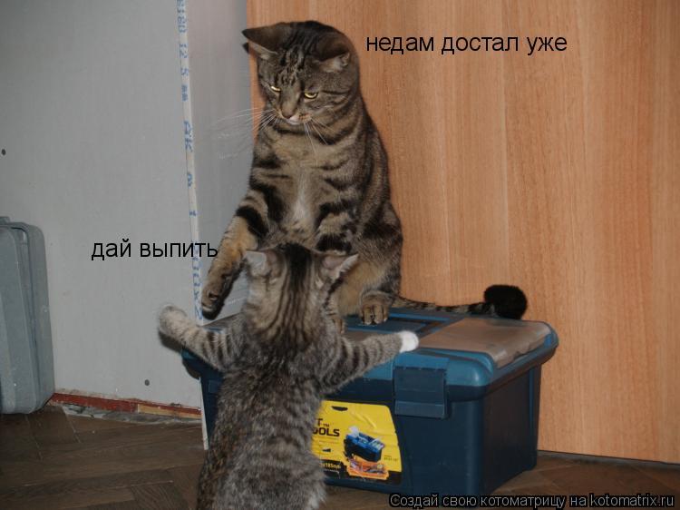Котоматрица: дай выпить дай выпить недам достал уже
