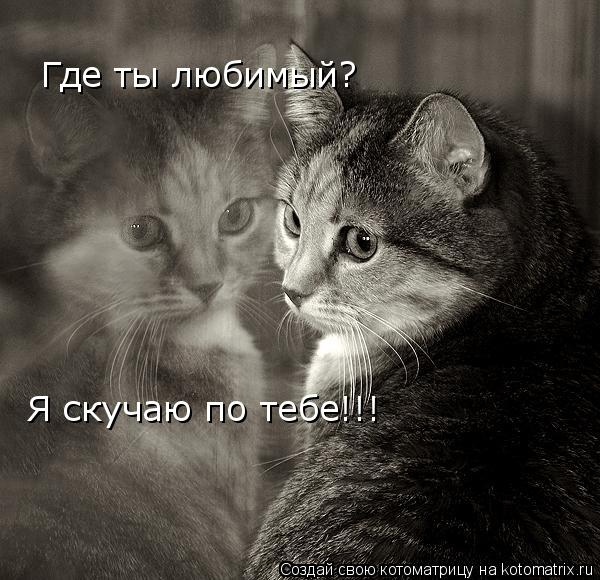Котоматрица: Где ты любимый? Я скучаю по тебе!!!