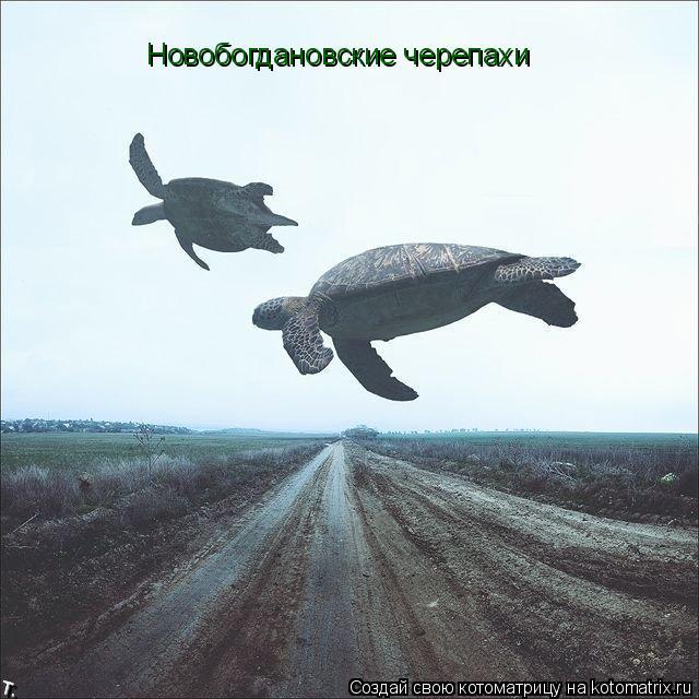 Котоматрица: Новобогдановские черепахи