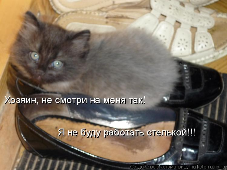 Котоматрица: Хозяин, не смотри на меня так! Я не буду работать стелькой!!!
