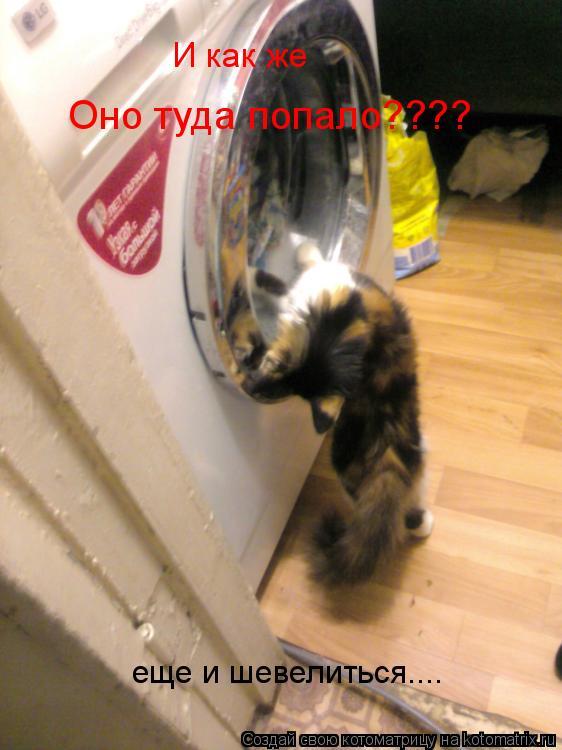 Котоматрица: И как же  Оно туда попало???? еще и шевелиться....
