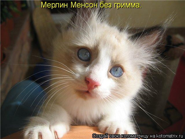 Котоматрица: Мерлин Менсон без гримма.
