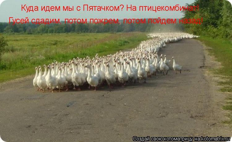 Котоматрица: Куда идем мы с Пятачком? На птицекомбинат! Гусей сдадим, потом пожрем, потом пойдем назад!