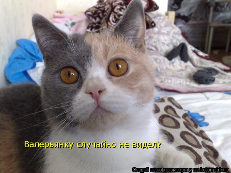 Котоматрица: Валерьянку случайно не видел?