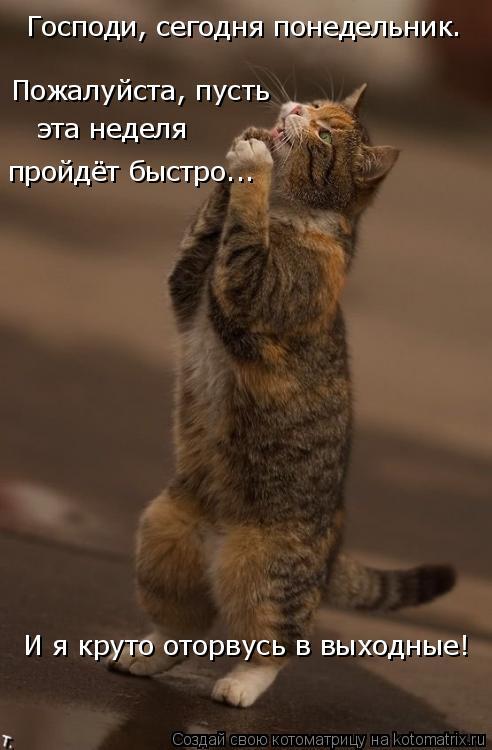 Котоматрица: Господи, сегодня понедельник. Пожалуйста, пусть эта неделя  пройдёт быстро... И я круто оторвусь в выходные!