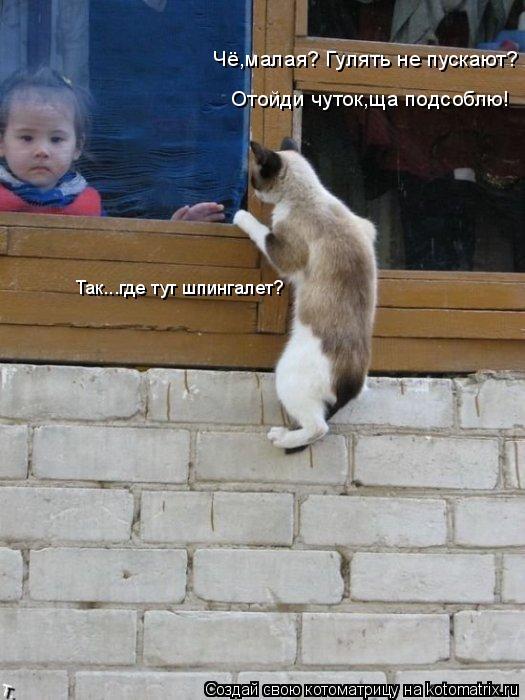 Котоматрица: Чё,малая? Гулять не пускают? Отойди чуток,ща подсоблю! Так...где тут шпингалет?