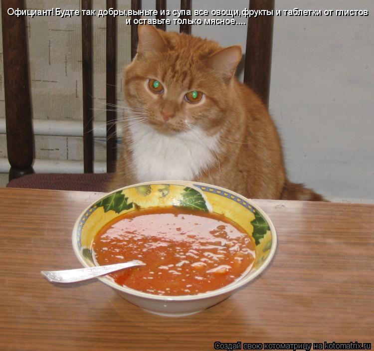 Котоматрица: Официант!Будте так добры,выньте из супа все овощи,фрукты и таблетки от глистов и оставьте только мясное....