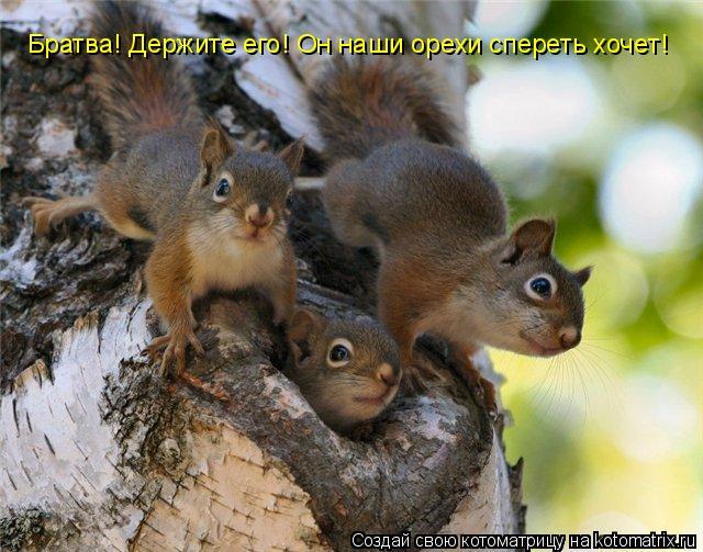 Котоматрица: Братва! Держите его! Он наши орехи спереть хочет!