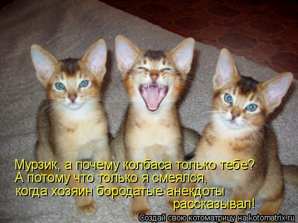Котоматрица: Мурзик, а почему колбаса только тебе? А потому что только я смеялся, когда хозяин бородатые анекдоты рассказывал!
