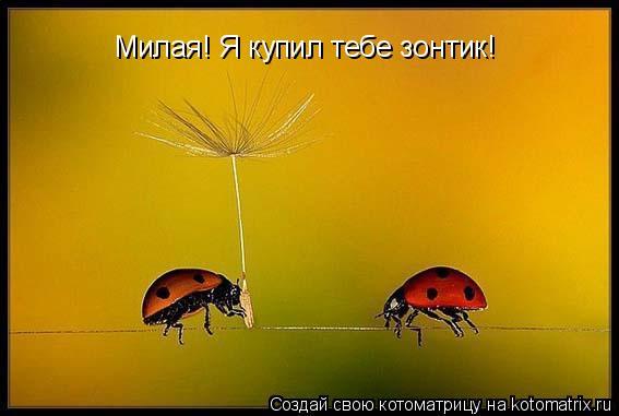 Котоматрица: Милая! Я купил тебе зонтик!