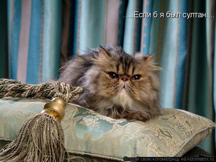 Котоматрица: .....Если б я был султан....
