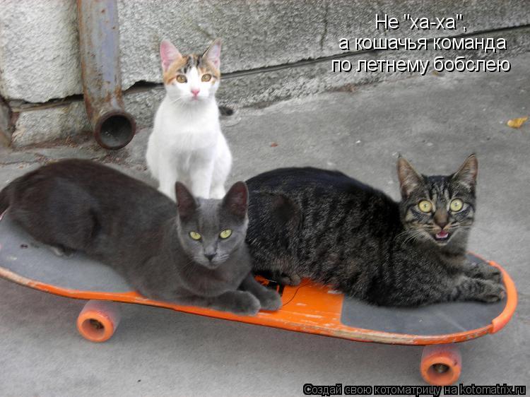 """Котоматрица: Не """"ха-ха"""", а кошачья команда по летнему бобслею"""