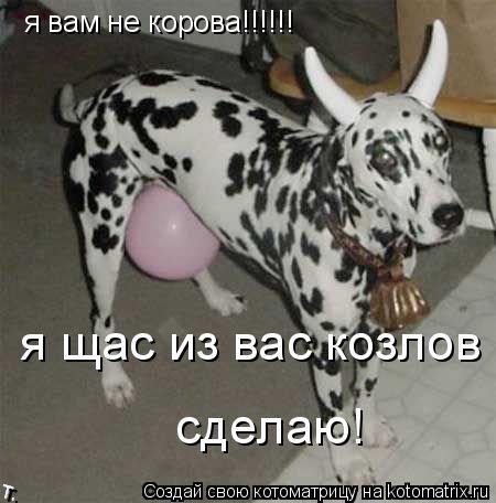 Котоматрица: я вам не корова!!!!!!  я щас из вас козлов сделаю!  сделаю!